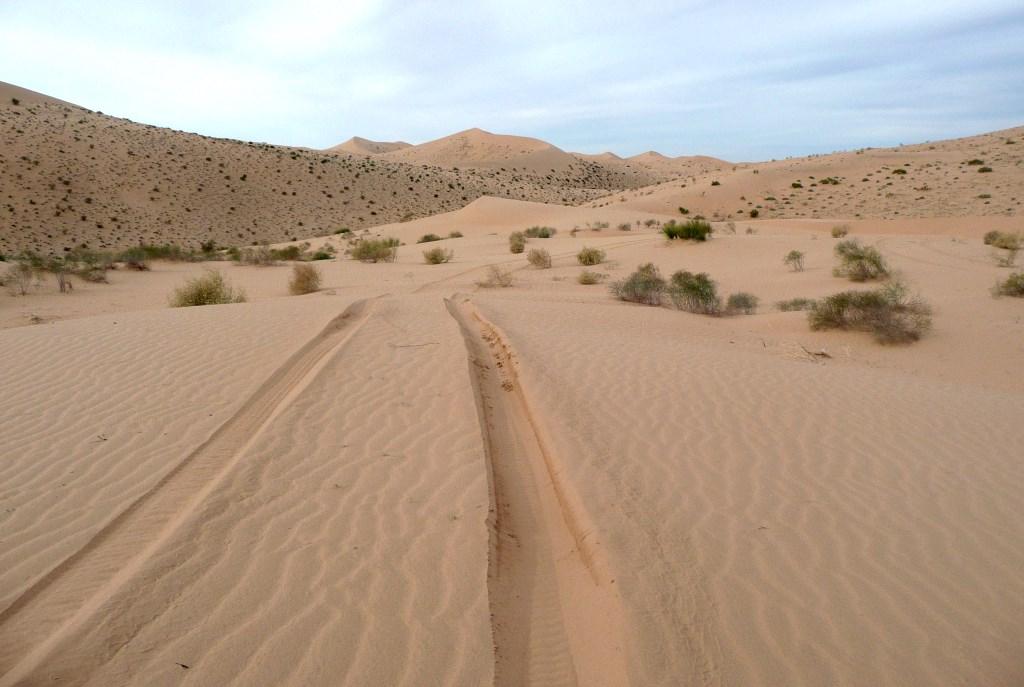 DuneTracks_P1000570.jpg